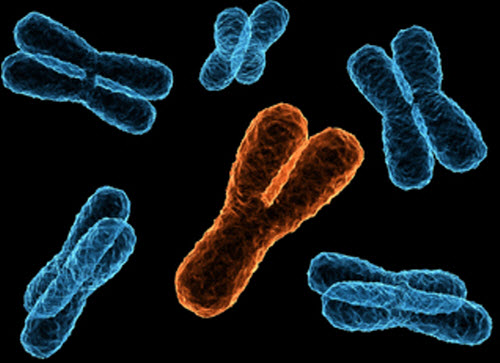 x en y chromosoom