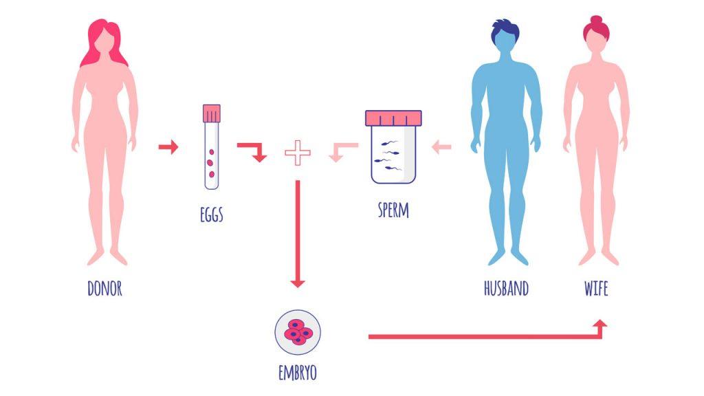 Embryodonatie stap voor stap