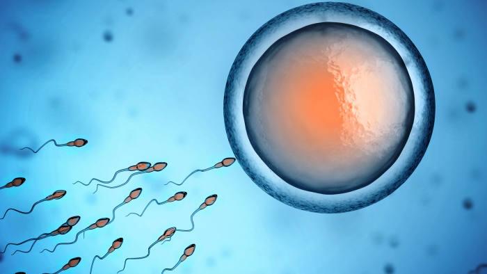 Wat is sperma of zijn zaadcellen?